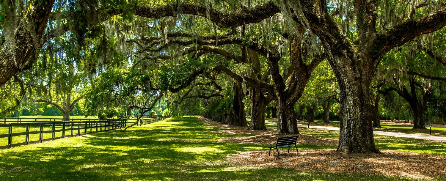 Visit these plantations in Charleston, SC!