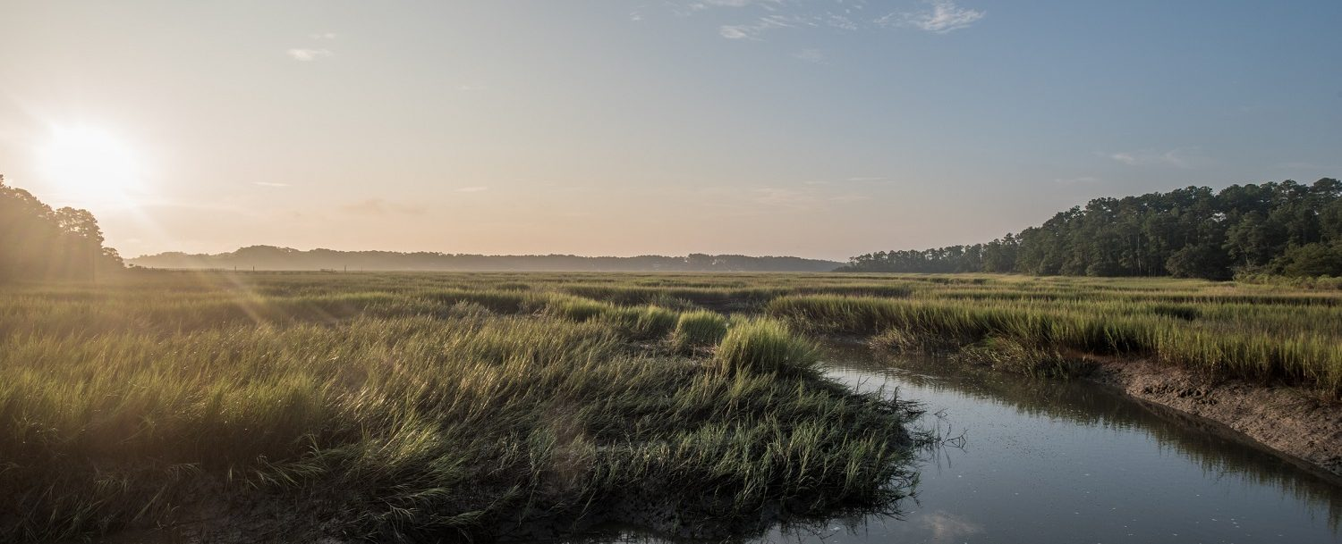 beautiful marshland scenery on kiawah island, sc