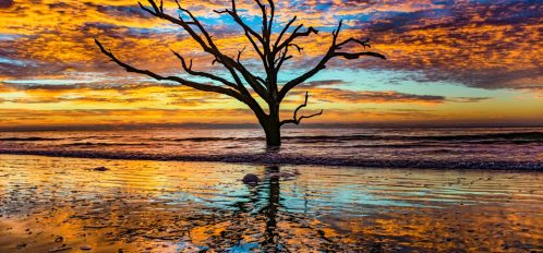 charleston tree against the sunset on edisto beach